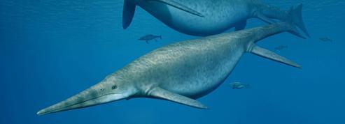 Des «dauphins» gros comme des baleines ont nagé dans les océans