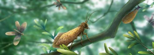 Des ancêtres des papillons aux ailes dorées