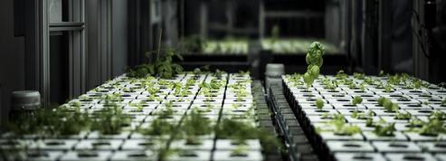 Anne Hidalgo inaugure la première ferme urbaine... en sous-sol