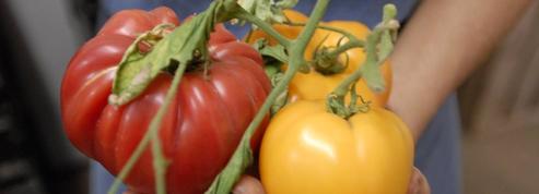 Alimentation: «L'Amap est une forme de résistance à la folie de l'hyperconsommation»