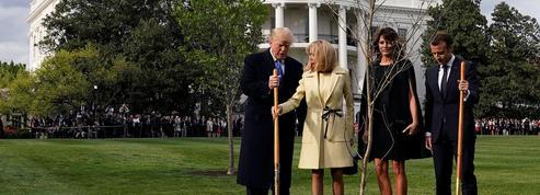 Pourquoi le chêne planté par Macron et Trump à la Maison-Blanche a disparu