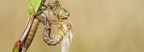 Légèreté record grâce à l'aile de libellule