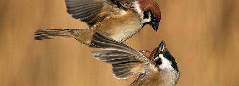 SOS espèces en danger : des centaines d'animaux menacés d'extinction en France