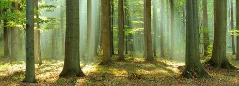 Dans la forêt ,de Jean Hegland: promenons-nous dans les bois...