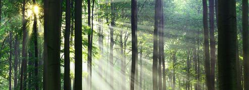 Eryck de Rubercy: «Les arbres font partie dupatrimoine»