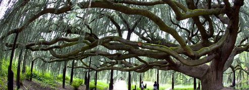 Rendez-vous aux jardins 2018: 5 idées pour se mettre au vert à Paris