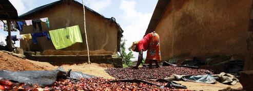 L'Europe interdira le biocarburant à l'huile de palme en 2030