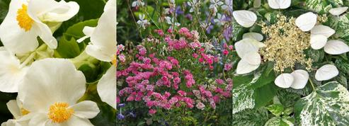 Jardin: l'innovation horticole se porte bien