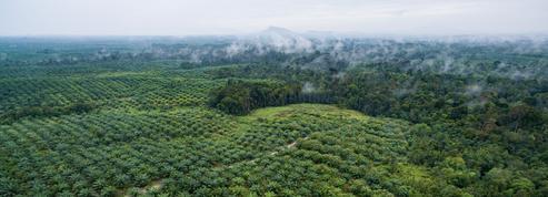 L'huile de palme est une catastrophe écologique (mais l'interdire serait pire encore)