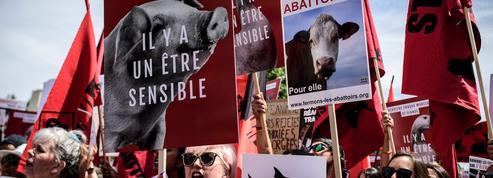 Pour Jean-Pierre Digard, l'animal n'est pas un homme comme les autres