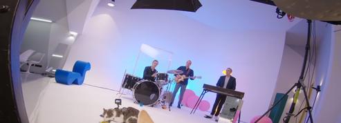 Chat alors ! Alain Chamfort devient un «chanteur à minets» dans son nouveau clip
