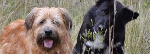 Garde d'animaux: des sites au poil