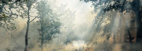 Comment la France se prépare aux feux de forêts