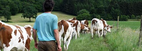 Les agriculteurs peinent à trouver des remplaçants pour les vacances d'été