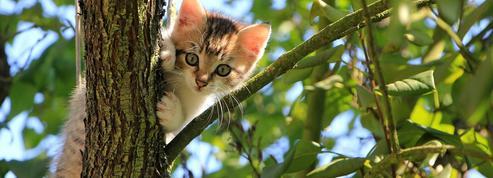 Hugo, Maupassant, Baudelaire... Des chats et des hommes
