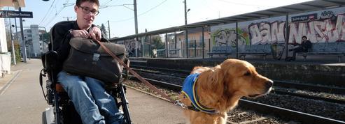 Handicap : «Mon chien, c'est la condition de mon autonomie»