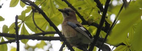 Les oiseaux dévorent 400millions de tonnes d'insectes
