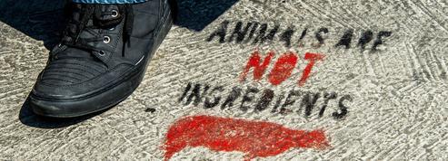 Menacé de débordements, le festival vegan de Calais annulé par la mairie