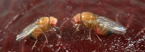 Le réchauffement climatique va favoriser la prolifération d'insectes ravageurs de cultures