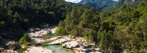 Un ver parasite tropical urogénital introduit en Corse en 2013 pourrait encore sévir