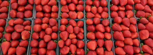 L'Australie en alerte après la découverte d'aiguilles dans des fraises