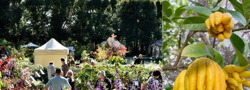 Les plantes bizarres s'invitent à Saint-Jean-de-Beauregard