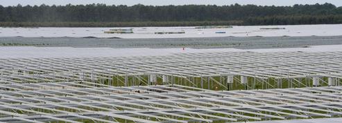 Avec Neoen, le renouvelable français s'exporte bien