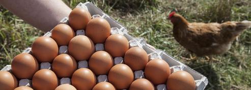 La lutte contre l'élevage des poules en batterie dope le prix des œufs