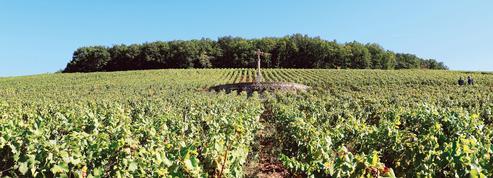 En Bourgogne, les vignerons se mobilisent pour préserver la colline de Corton