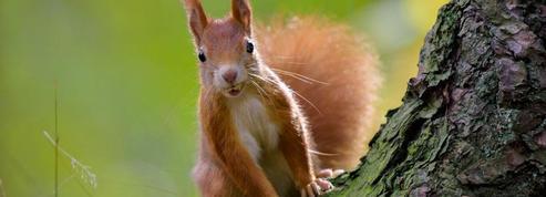 L'équipe du Bénin ne veut plus du surnom des «écureuils» jugé trop amical