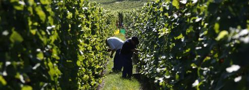 Travailleurs saisonniers : la fin de l'exonération de charges sera compensée