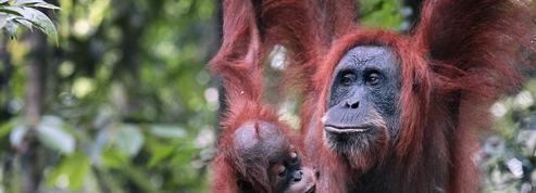 60% des animaux sauvages ont disparu en quarante-quatre ans