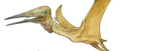 Un nouveau reptile volant géant découvert en Provence