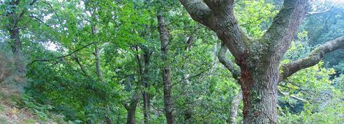 Groupements fonciers forestiers: une fiscalité toujours très verte