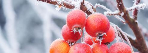 Préparez vos plantes à affronter le froid et l'humidité de l'hiver