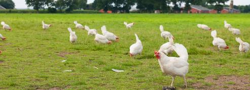 Le bien-être animal, nouvel enjeu clé pour les distributeurs