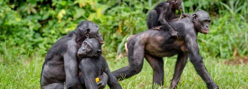 Frans de Waal: «Il ne faut pas nier que les animaux puissent avoir des émotions»