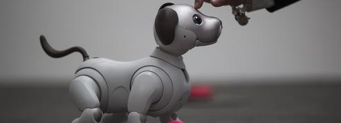 Peut-on vraiment aimer un chien robot à 2500 euros?
