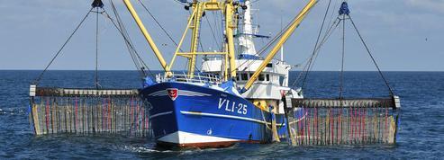 Les Pays-Bas risquent une sanction dans le dossier de la pêche électrique