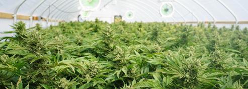 Formé par Pôle emploi au jardinage, il se lance dans la culture de cannabis