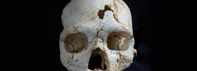 Les experts évoquent que l'hominidé baptisé «Cranium 17» ait été blessé mortellement par un droitier. Crédits: Plos One