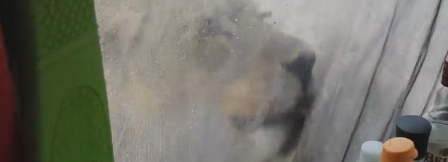 Des lionnes lèchent une tente et surprennent des campeurs. Crédits: Youtube/ Francie Francisca Lubbe