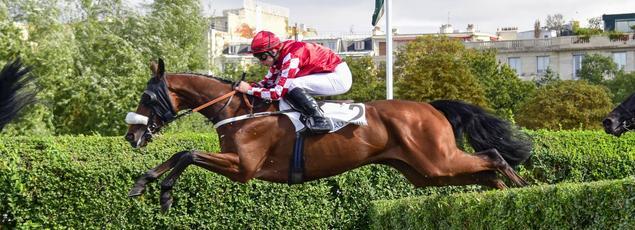 Une enquête a été ouverte suite à la mort d'un cheval sur l'hippodrome de Cagnes-sur-Mer lundi.