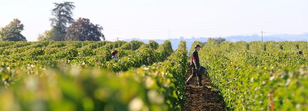 Avec 41,9Mhl (-12% par rapport à 2015), le pays de Rabelais se classe au 2erang du globe en termes de volumes, mais sur la première marche en ce qui concerne la valorisation des vins.