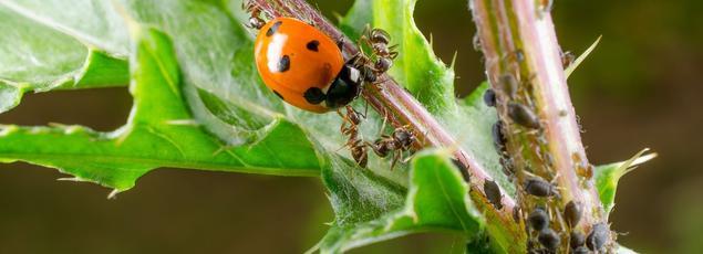 L 39 actualit du jardin conseils et d corations tendances en jardinage - Comment se debarrasser des fourmis sur les arbres fruitiers ...