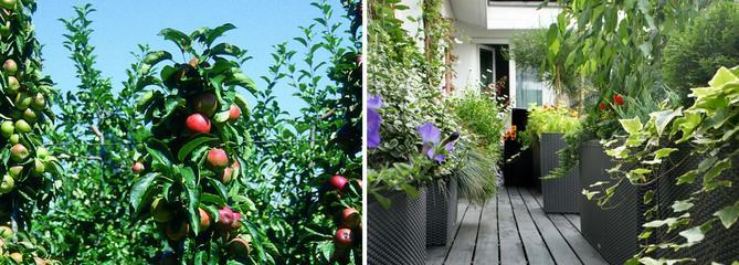 Cultiver un verger sur son balcon, c'est possible !