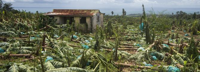 Ouragan Maria : les bananiers de Guadeloupe et de Martinique sont détruits