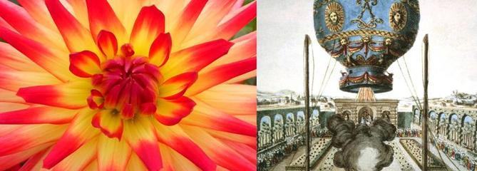 Histoire de plantes: les mystères de la fleur d'Hortense