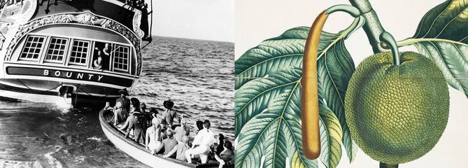 Histoire de plantes: une mutinerie pour l'arbre à pain