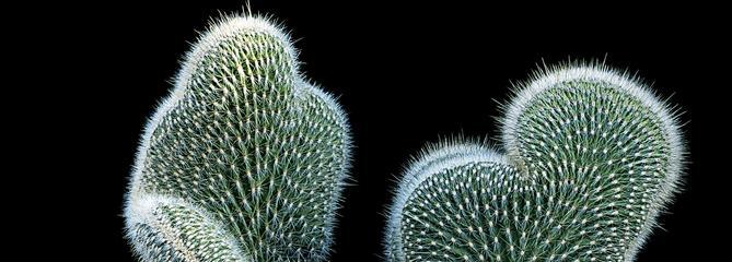 La beauté sculpturale des plantes succulentes